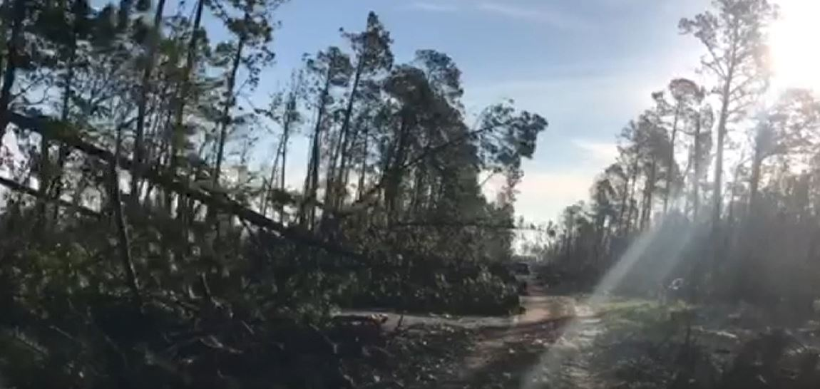 Pine trees lean into the roadway of Route 388 in Panama City, FL. (Source: CNN)