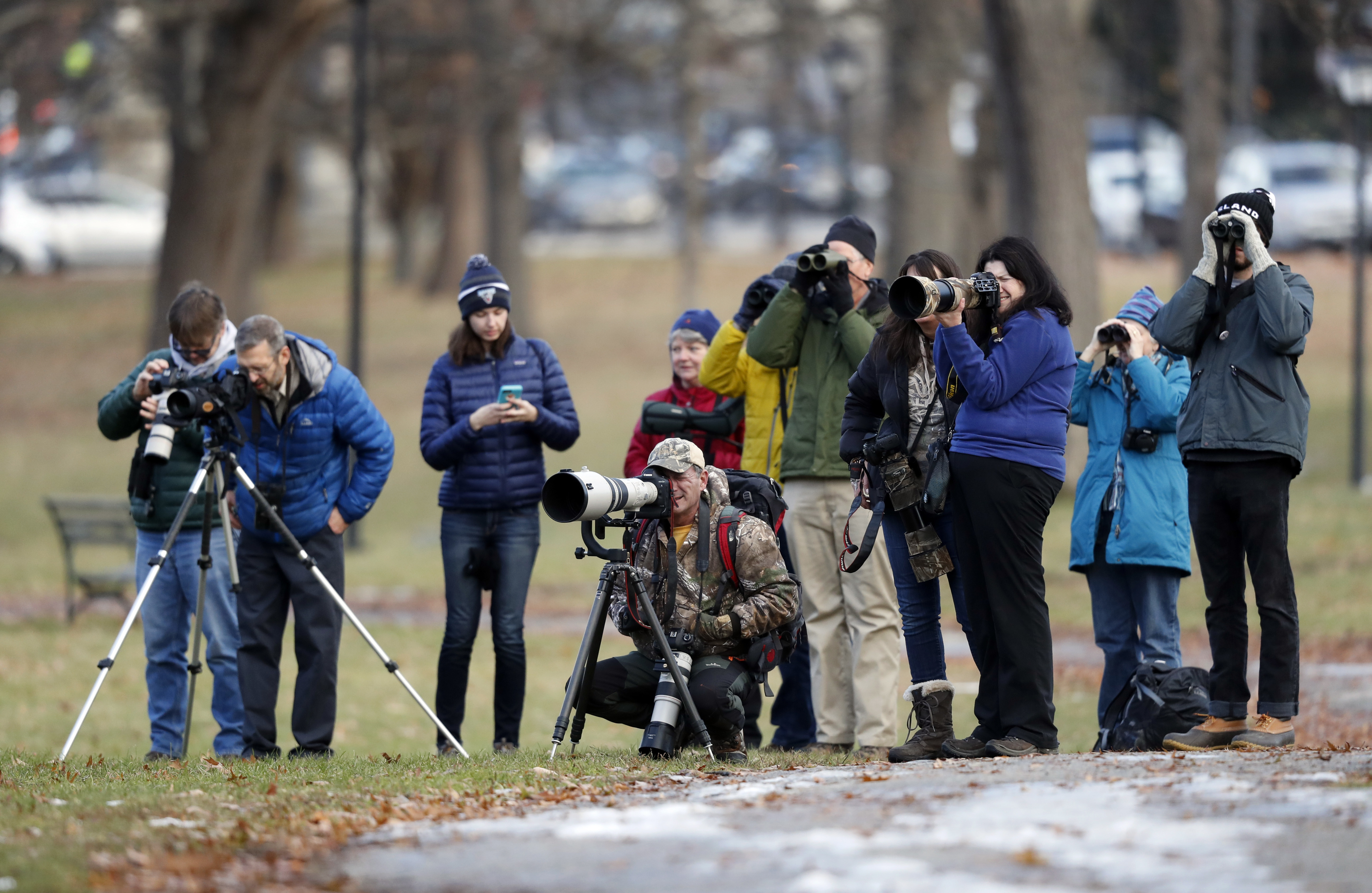 Birders watch and photograph a great black hawk at Deering Oaks Park, Friday, Nov. 30, 2018, in Portland, Maine. Audubon has called it potentially the first record of the species in the U.S. (AP Photo/Robert F. Bukaty)