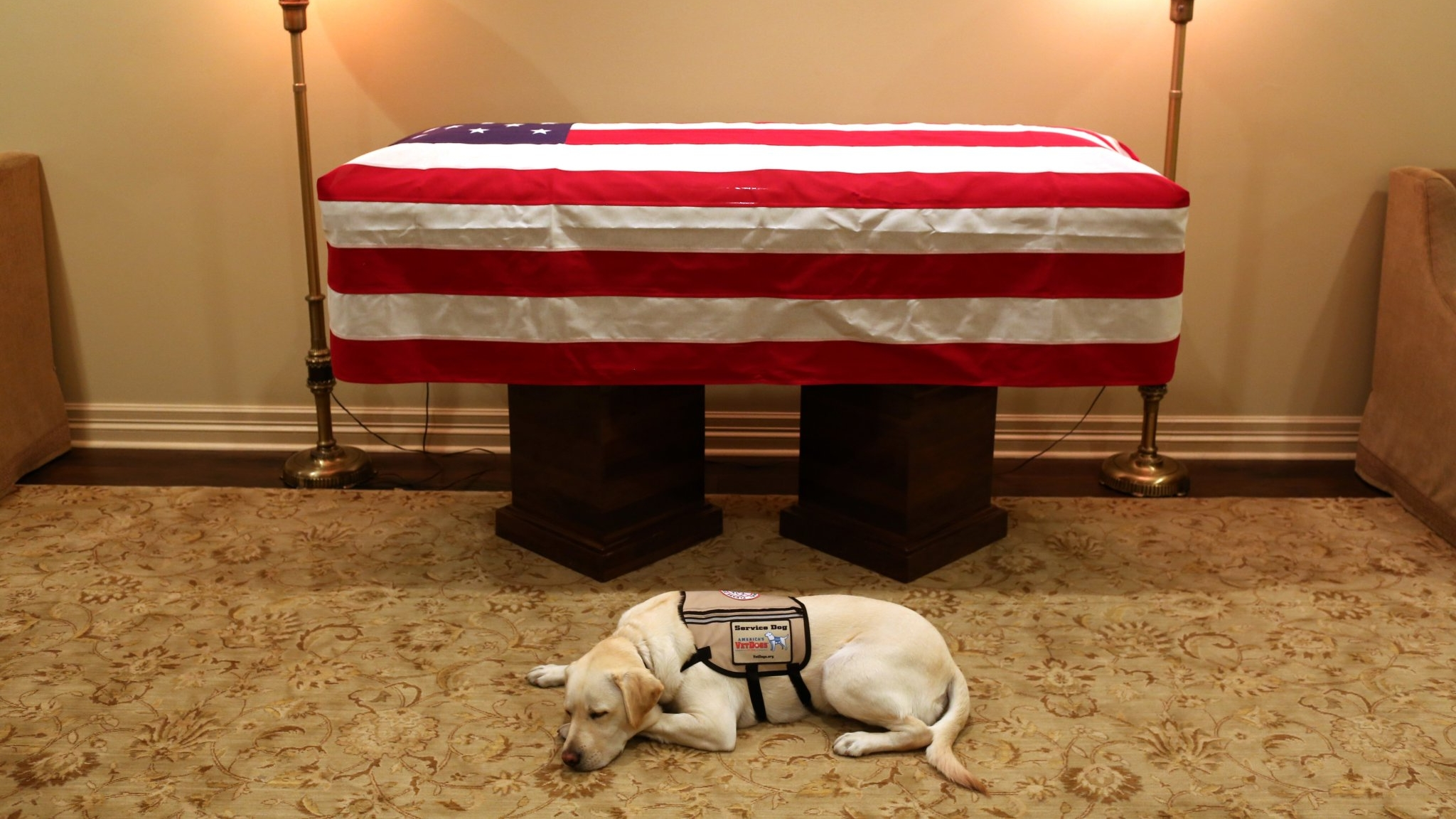 Sully, a therapy dog, is seen before the casket of George H.W. Bush. The dog accompanied Bush aboard a flight to Washington, DC, for memorial services. He will return to Walter Reed Medical Center to help the veterans that need him. (Source: Jim McGrath/Twitter)